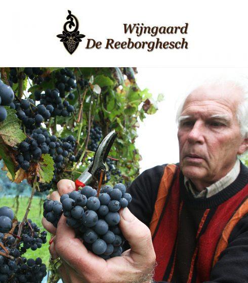 Wijngaard De Reeborghesch